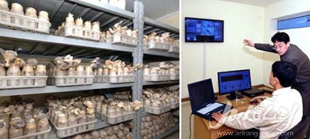 북한 원격버섯재배기술보급 시스템 도입